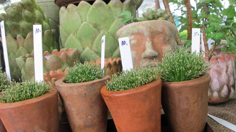 Container plants at Trade Secrets