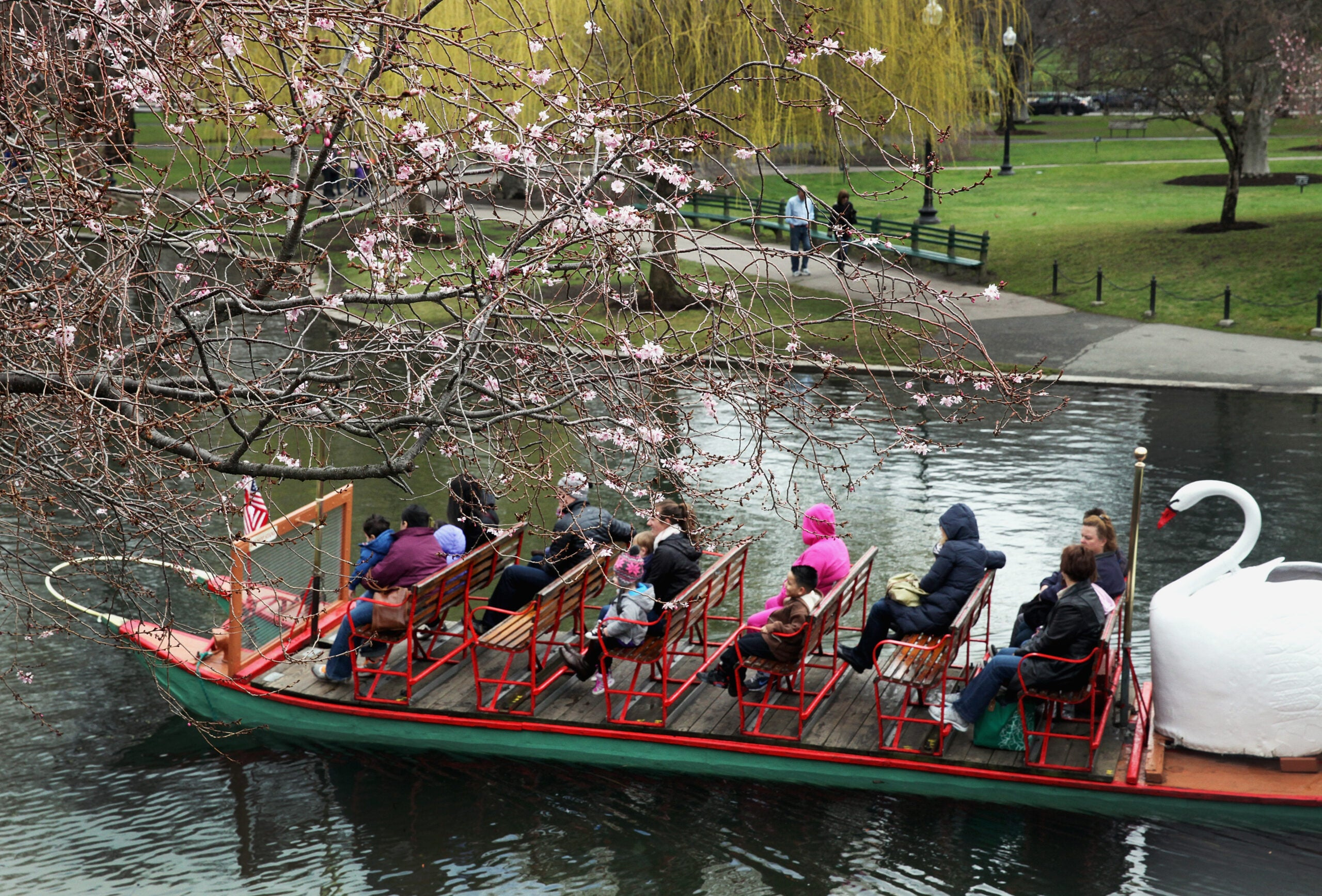 Swan boats made their debut at Boston's Public Garden in April 2013.