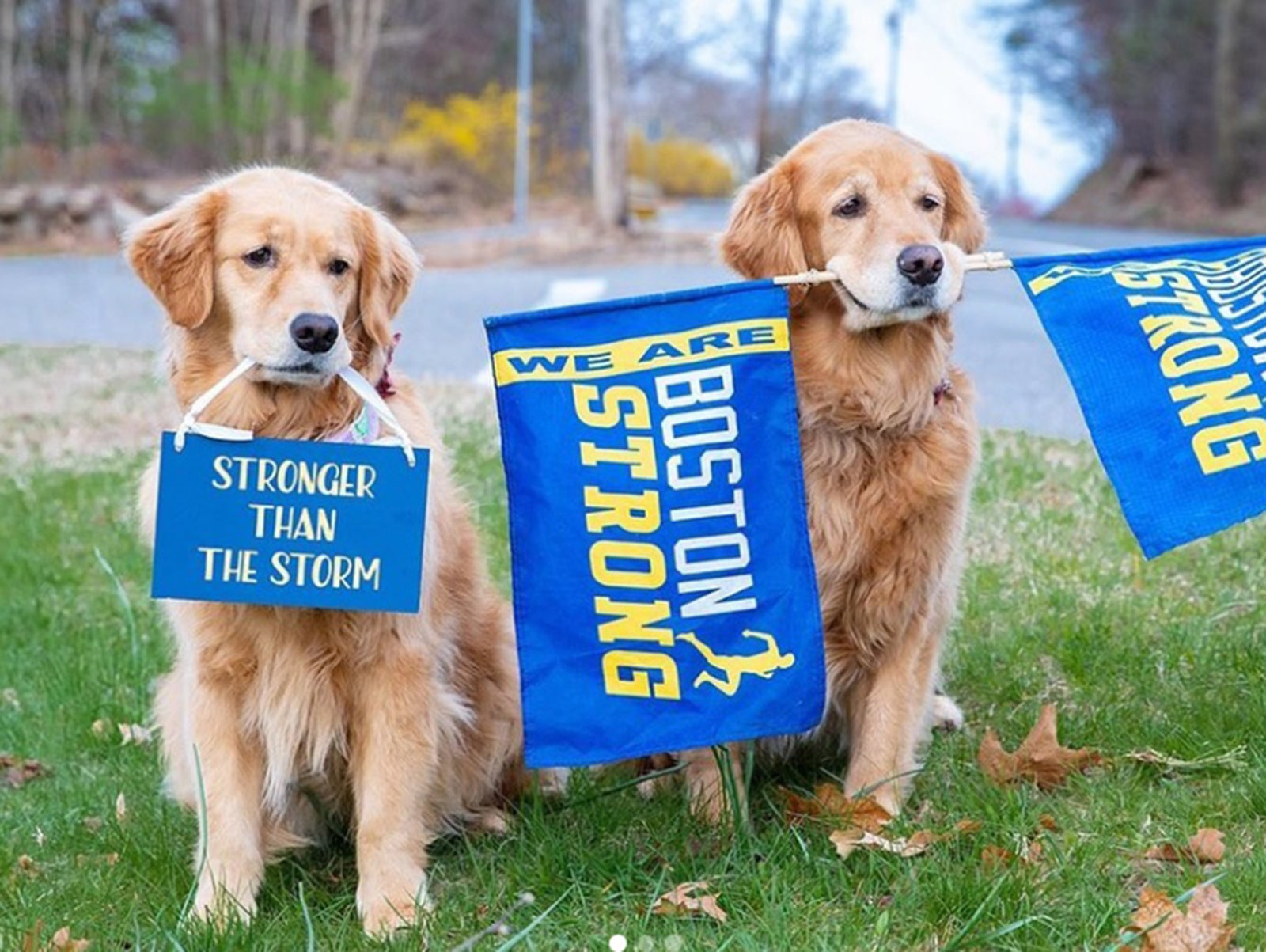 Penny and Spencer, the Marathon Monday dogs