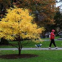 Foliage in the Public Garden in Boston.