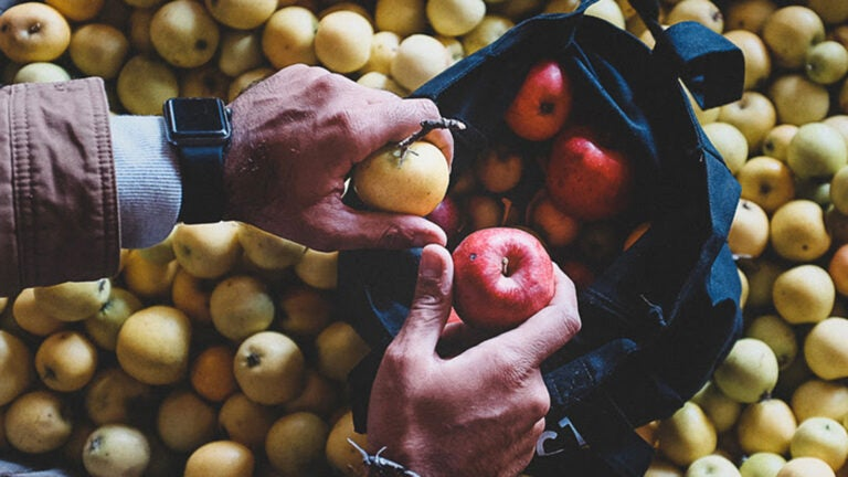 Artifact Cider Project launched a rare apple share