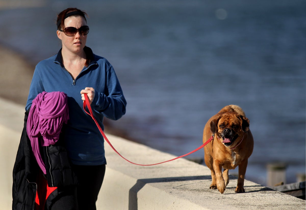 Walking a dog in Quincy.
