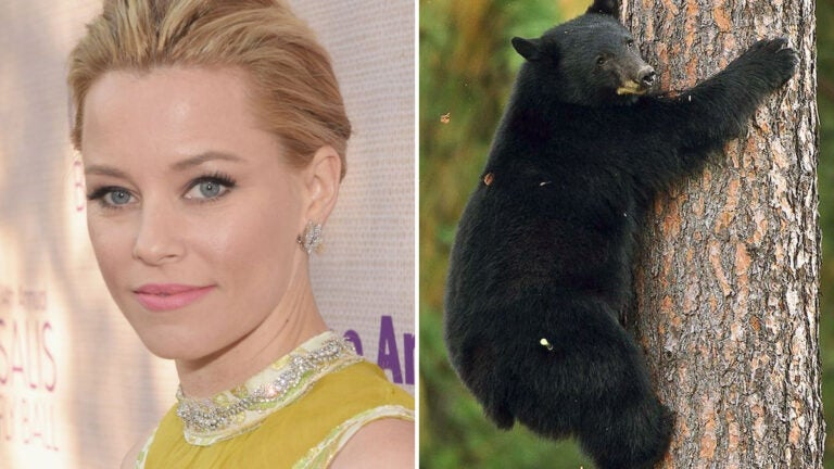 """Elizabeth Banks will direct the upcoming movie """"Cocaine Bear."""""""