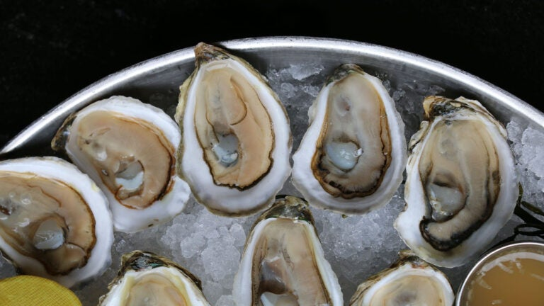 Oysters at Grill 23 & Bar