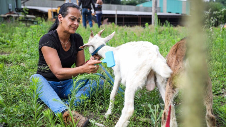 A Lowell woman was told to kill her pet goats in 72 hours. A week later, they are still alive.