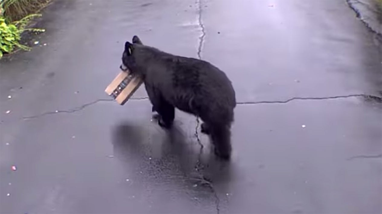 bear stealing package