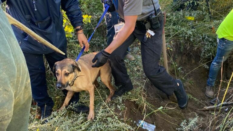 Boston firefighters rescue dog from drainpipe in West Roxbury